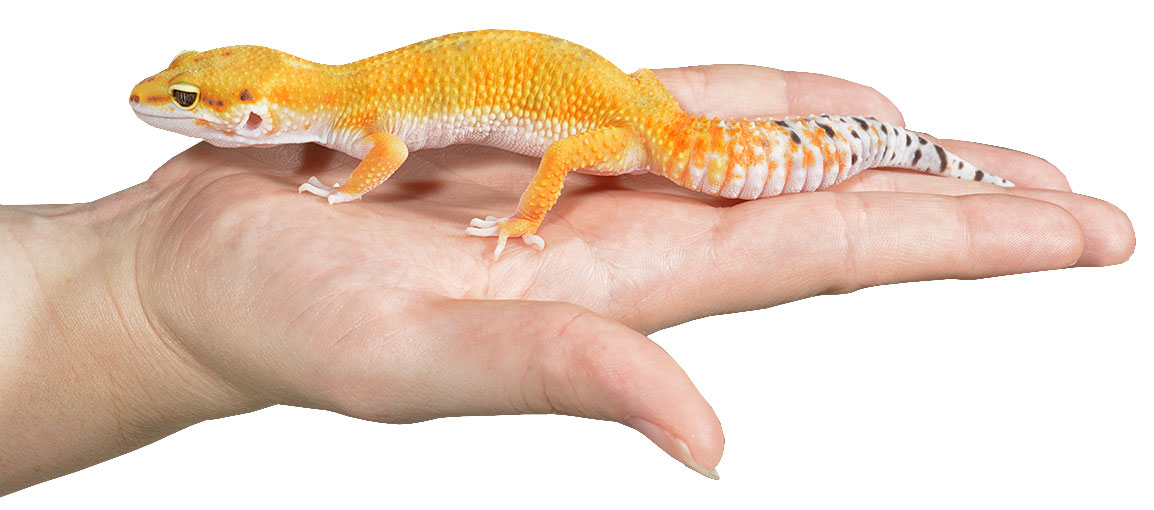 Reptile Health and Care - Reptiles by Mack