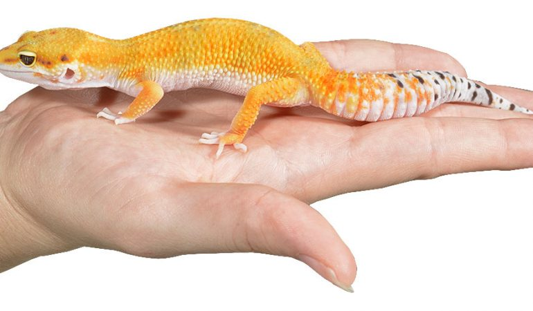 reptile health and care reptiles by mack